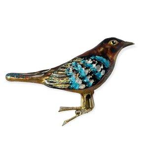 Vogelclip Vlaamse Gaai