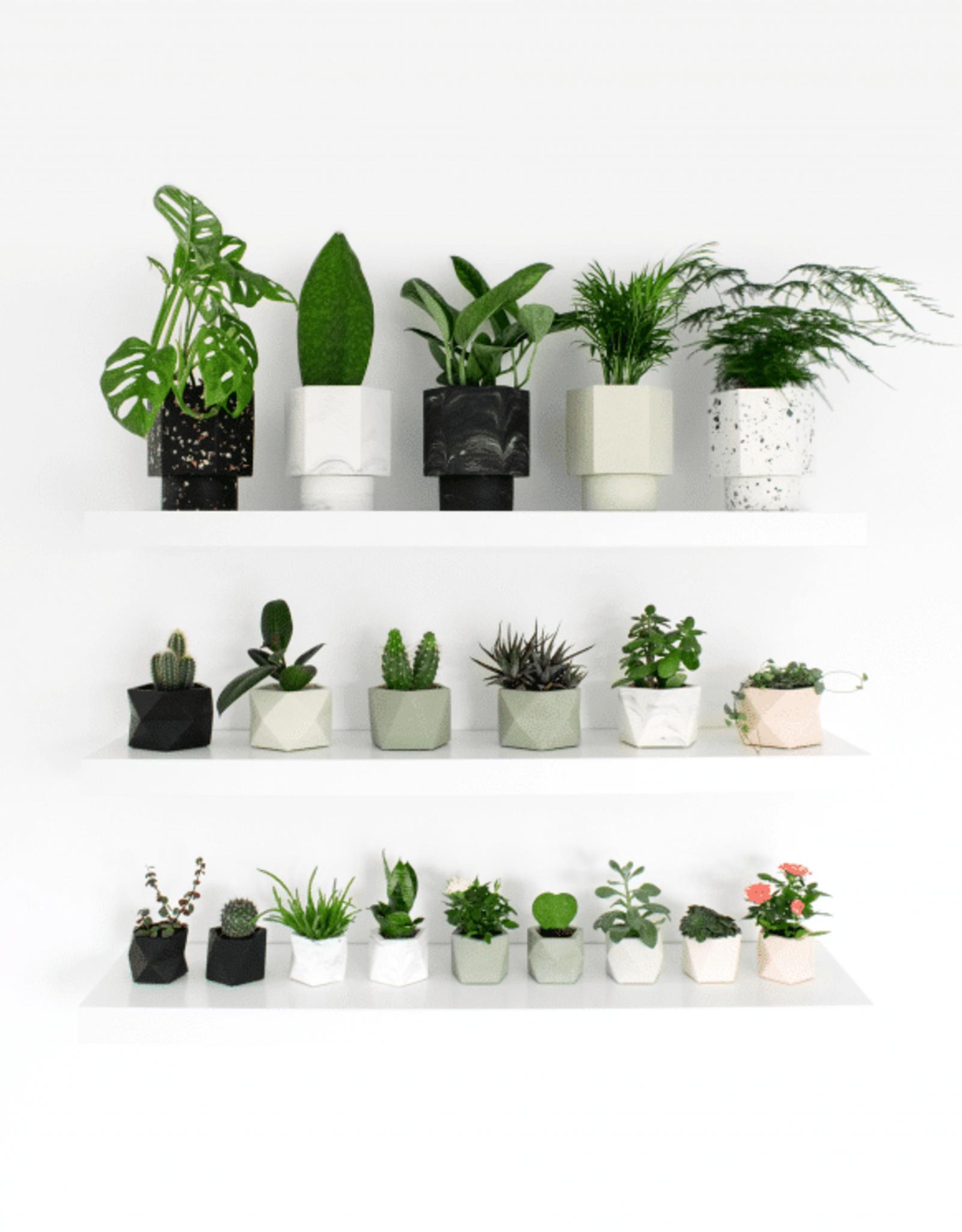 House Racoon House Raccoon - Mare planter - Medium - Jade Black