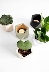 House Racoon House Racoon - Mare planter - Medium - Jade Black