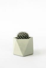 House Racoon House Raccoon - Mare planter - Medium - Silver green