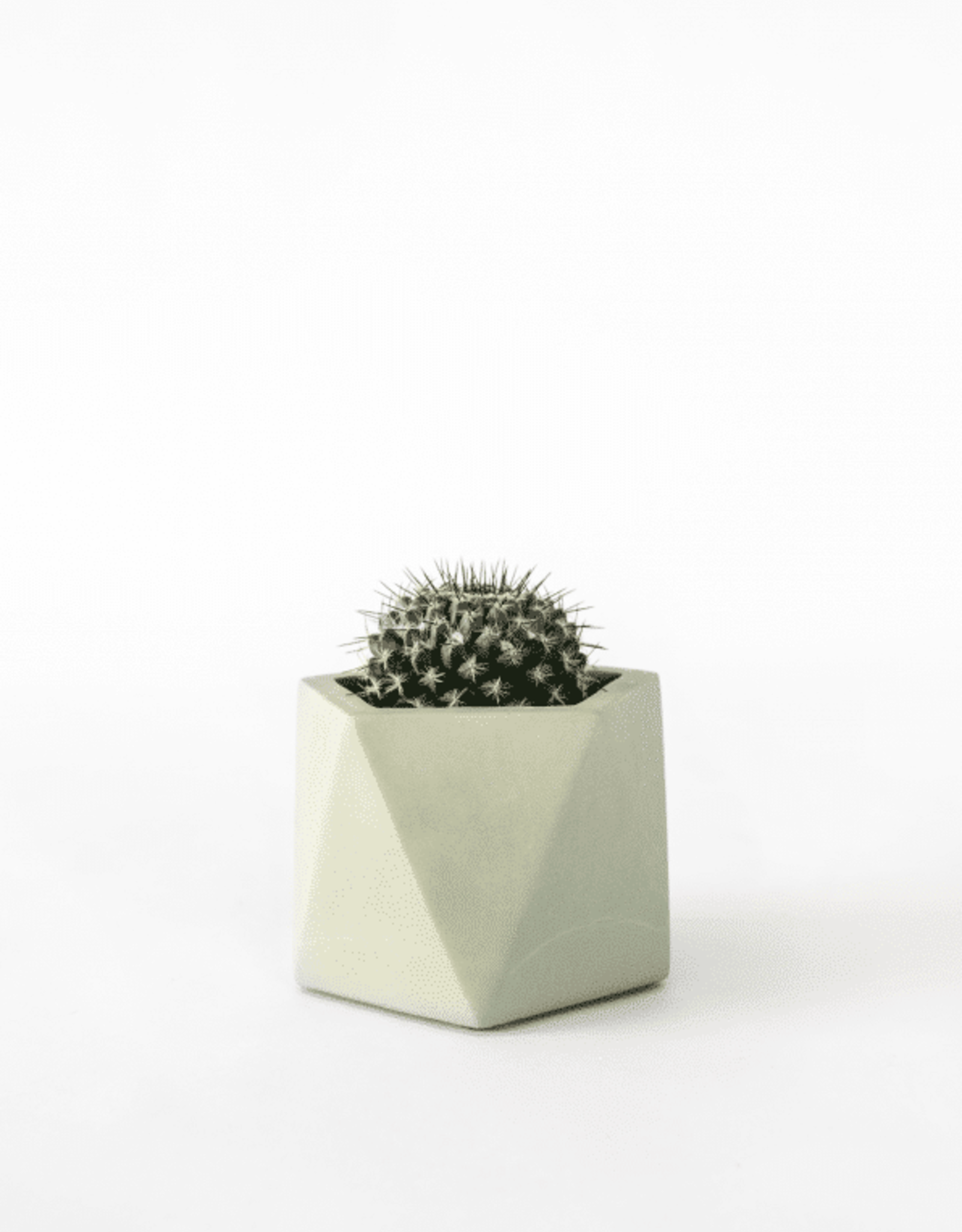 House Raccoon House Raccoon - Mare planter - Medium - Silver green