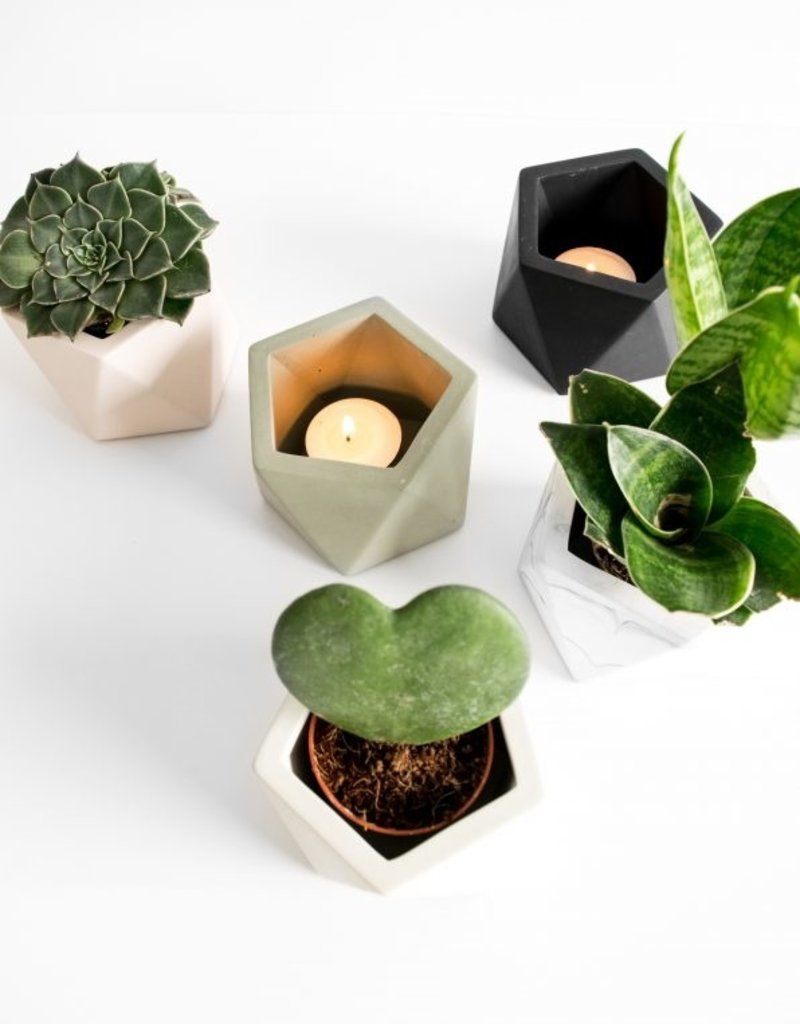 House Racoon House Racoon - Mare planter - Medium - Silver green