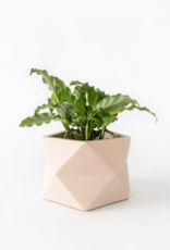 House Raccoon House Raccoon - Palua planter - Large - Millennial Pink