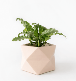 House Racoon House Raccoon - Palua planter - Large - Millennial Pink