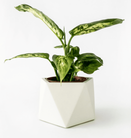 House Raccoon House Raccoon - Mare planter - Large - Silver green