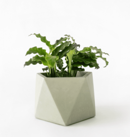House Racoon House Racoon - Mare planter - Large - Olive green