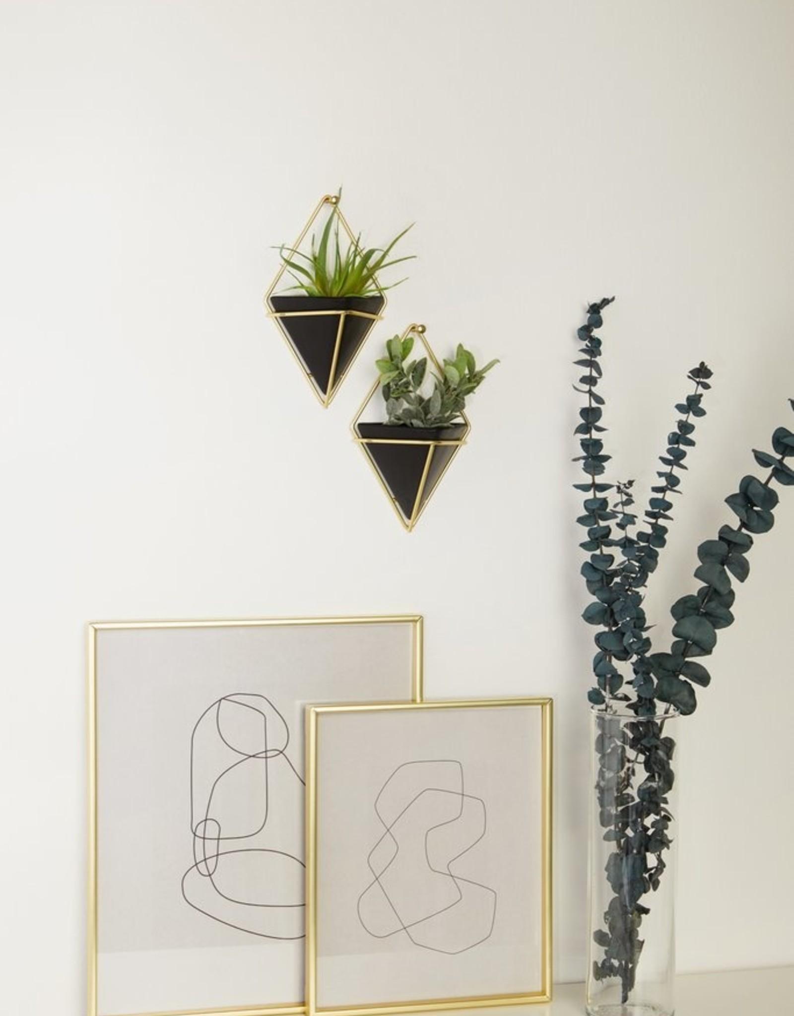 Umbra Umbra - Trigg wall display  sm