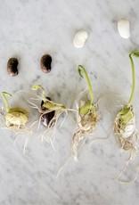 Botanopia Botanopia - Seed mix