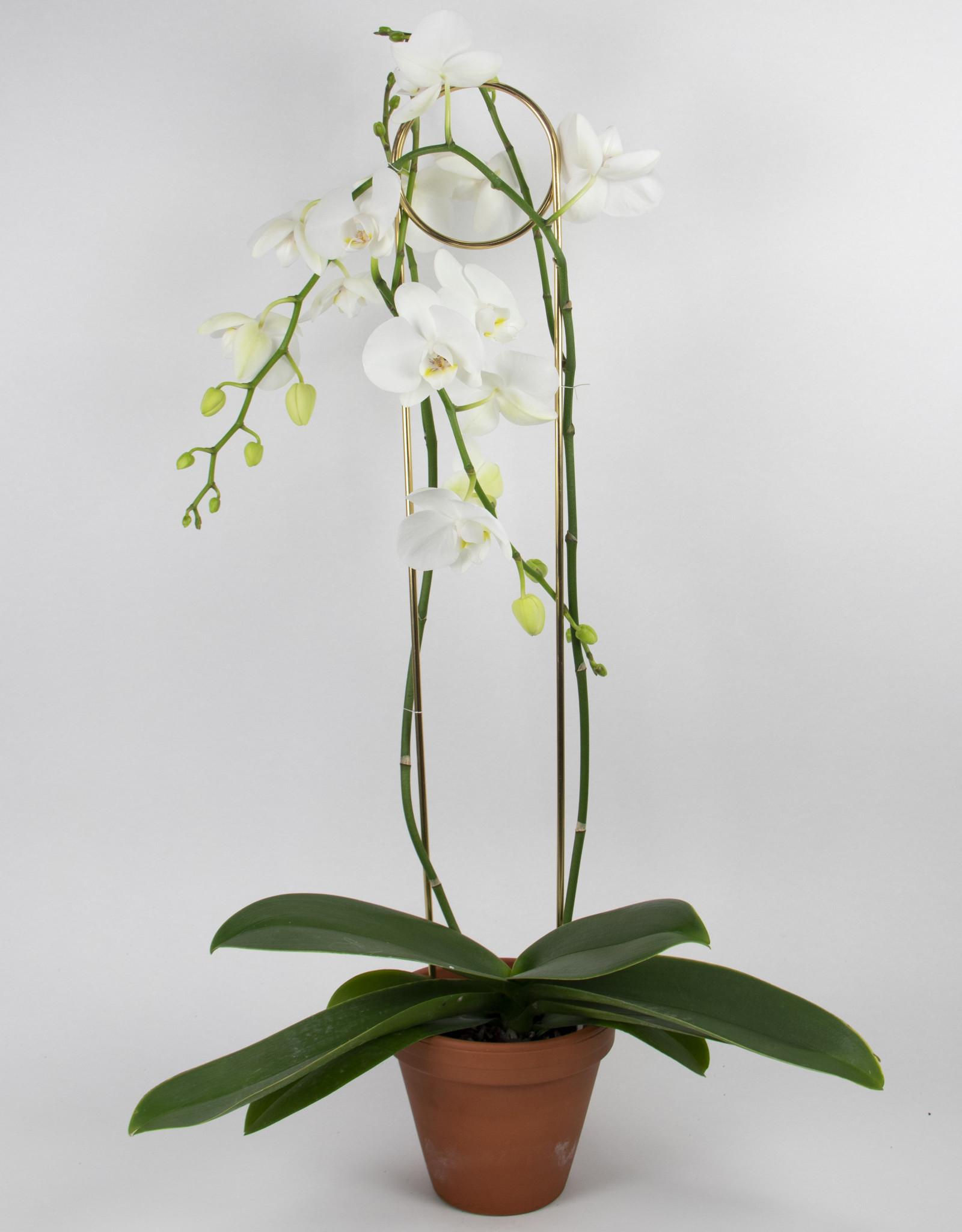 Botanopia Botanopia - Golden plant stake