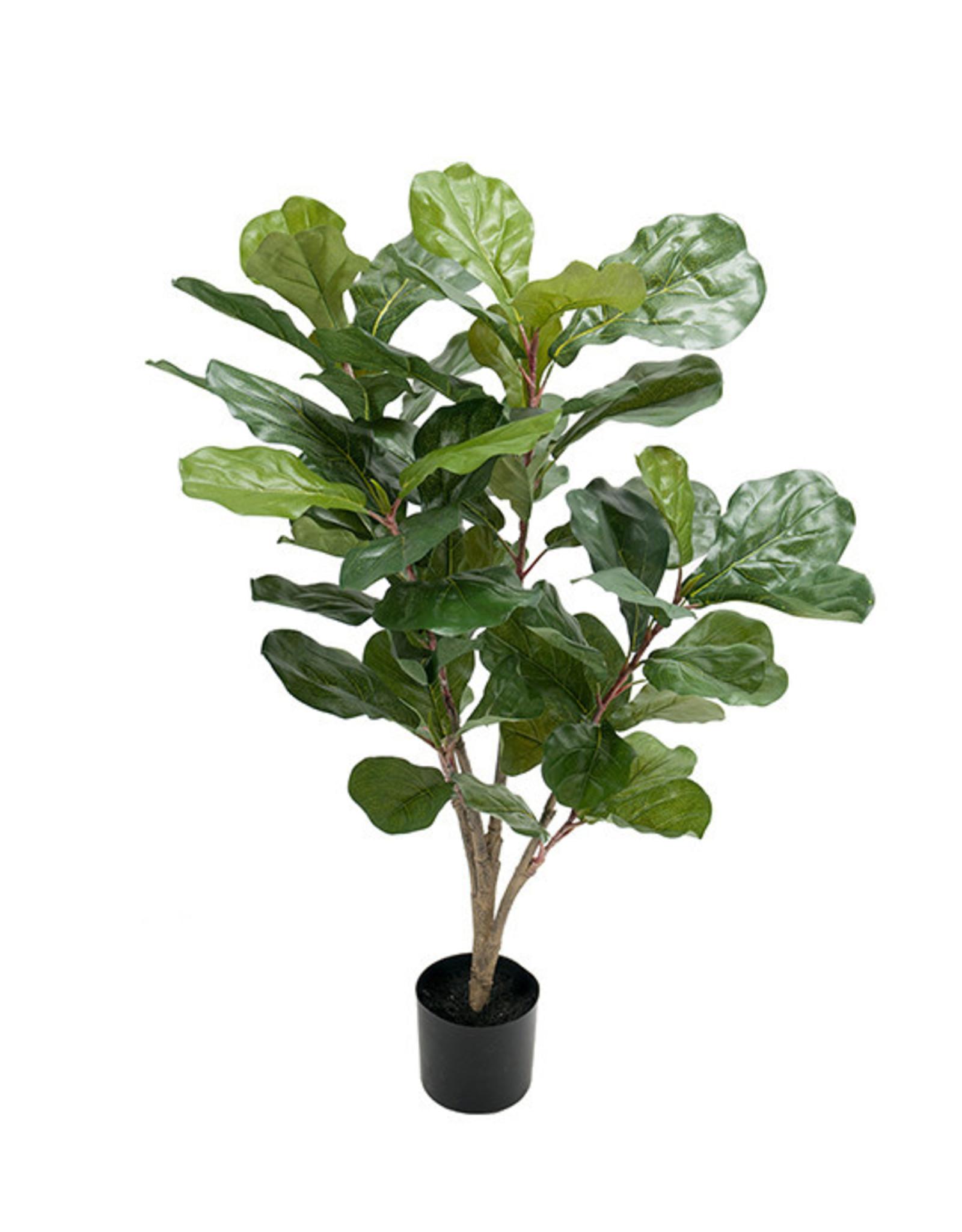 Mr Plant Mr Plant - Fiolfikus
