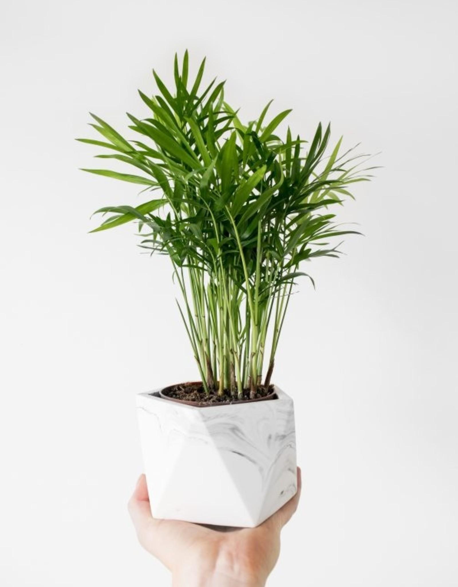 House Raccoon House Raccoon - Mare planter - Medium - White Marble
