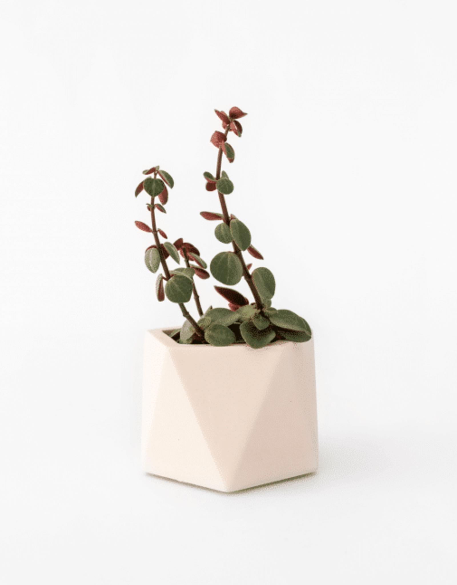 House Raccoon House Raccoon - Mare planter - Medium - Millennial Pink