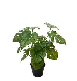 mr plant Mr Plant - Monstera plant