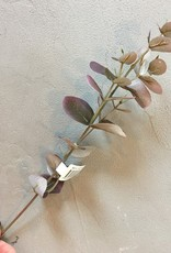 Mr Plant Mr Plant - Eucalyptus paars klein