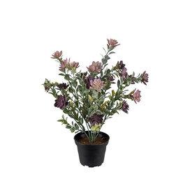 Mr Plant Mr Plant - Succulent