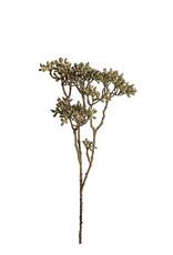Mr Plant Mr Plant - Bärkvist