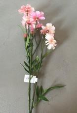 Mr Plant Mr Plant - Rosenskara
