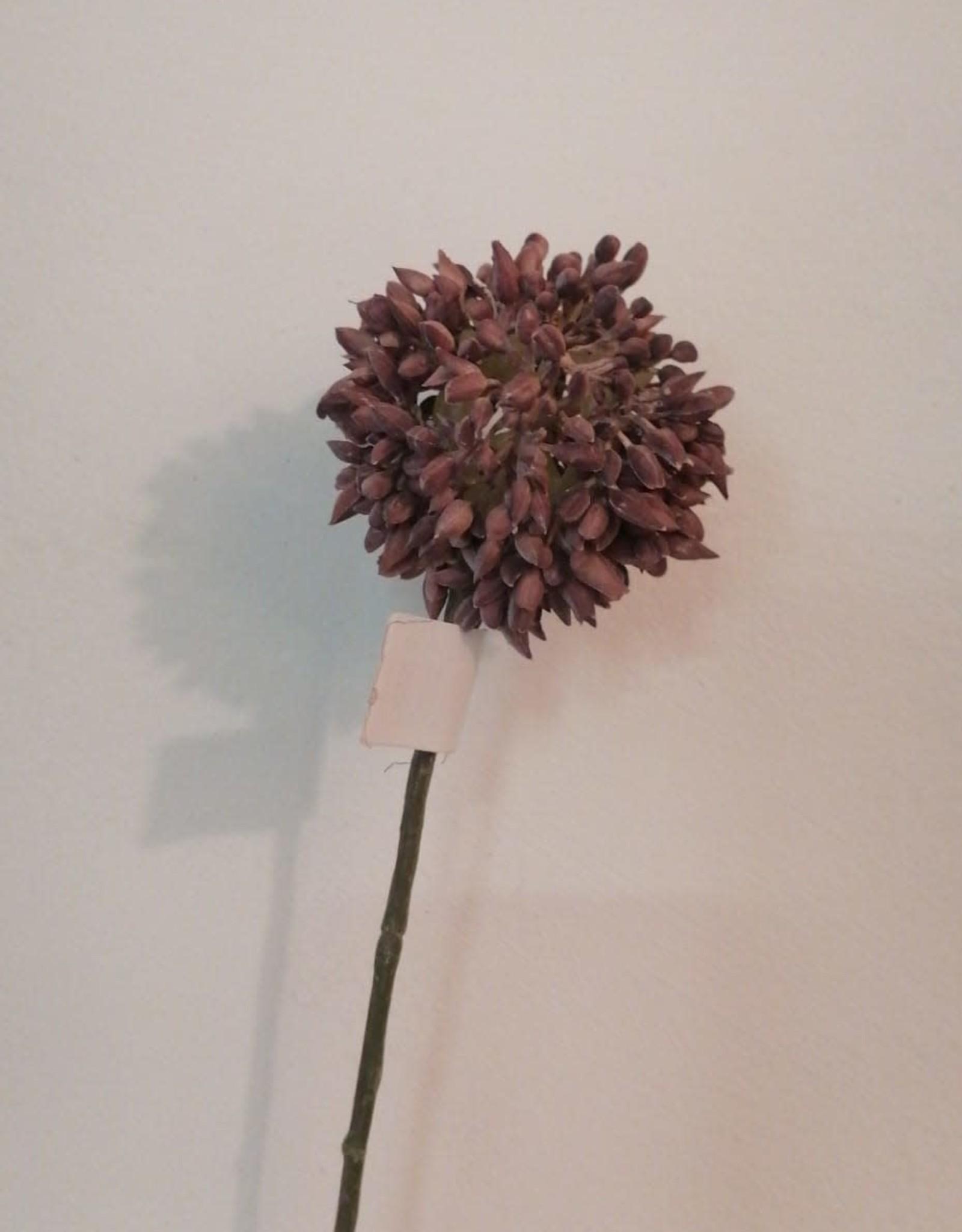 Mr Plant Mr Plant - Allium purple