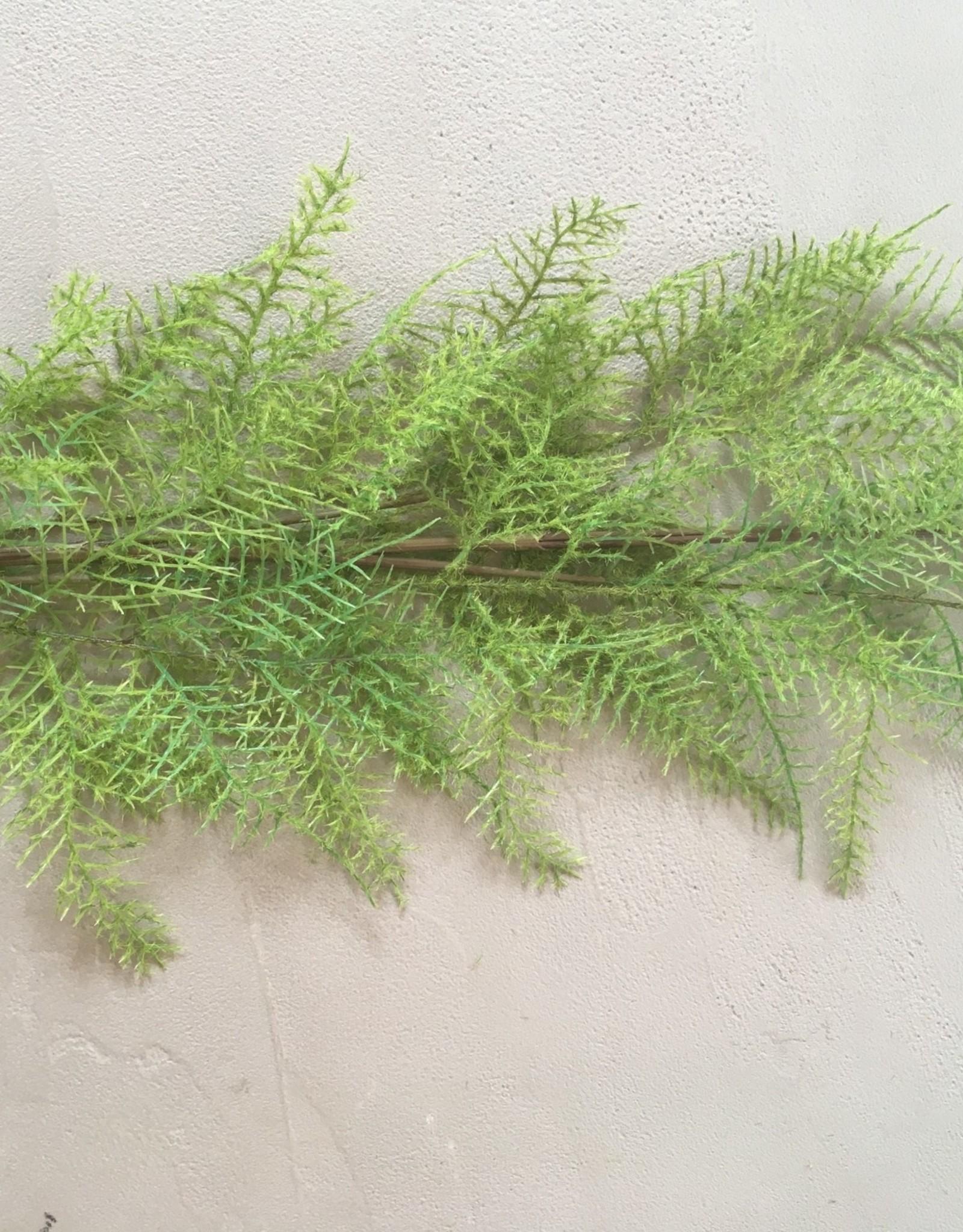 Mr Plant Mr Plant - Plumosus  blad