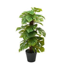 Mr Plant Mr Plant - Monstera