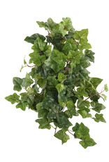 Mr Plant Mr Plant - Murgröna small