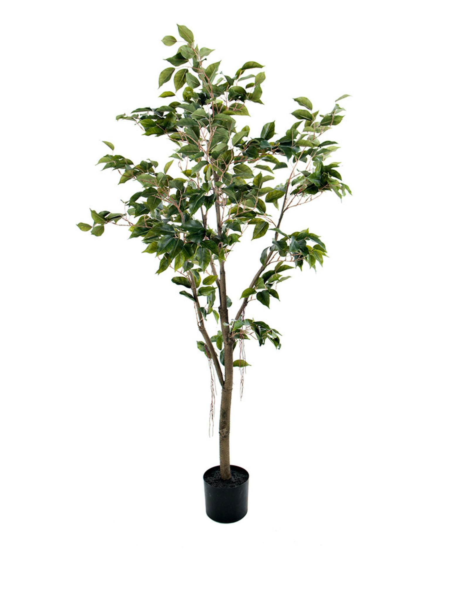 Mr Plant - F. Benjamin