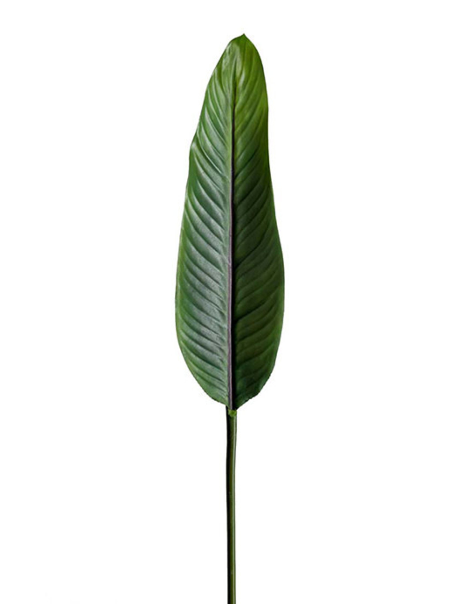 Mr Plant Mr Plant - Strelitzia blad