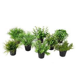 Mr Plant Mr Plant - Mix minivaxter