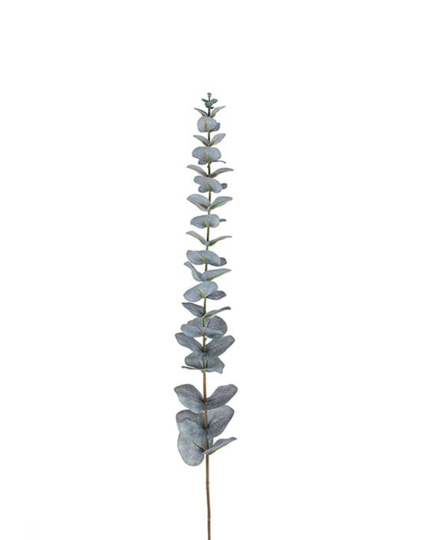 Mr Plant Mr Plant- Eucalyptus M