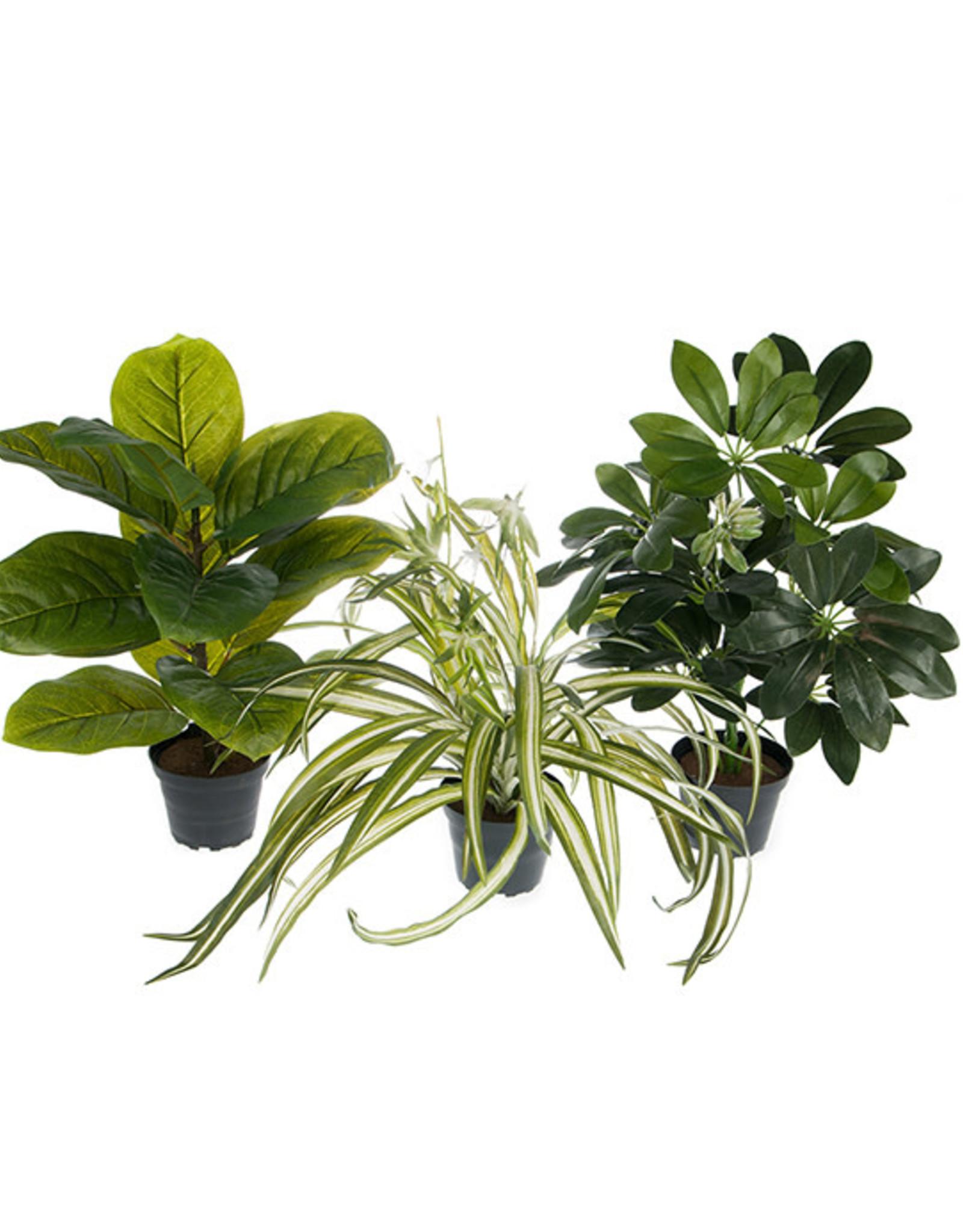 Mr Plant Mr Plant - Gronvakt mix
