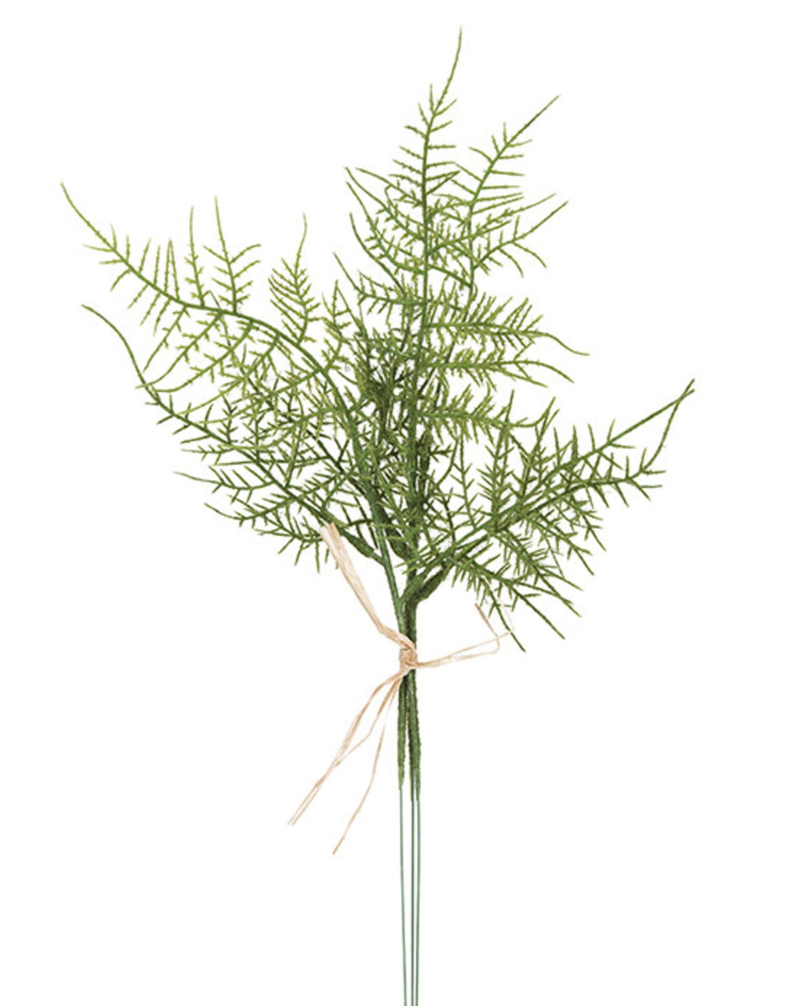 Mr Plant Mr Plant - Plumosus small