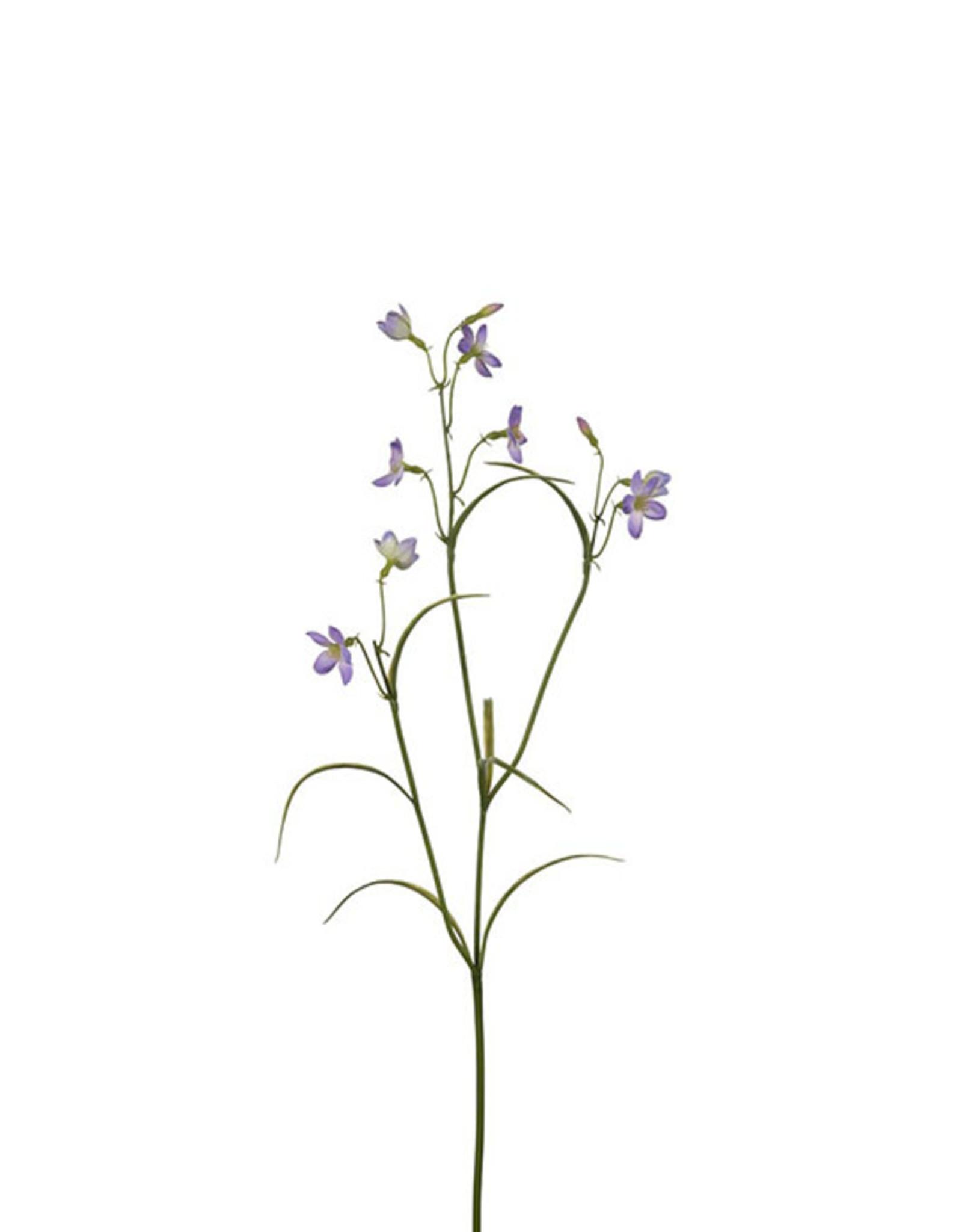 Mr Plant Mr Plant - Campanula