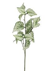 Mr Plant Mr Plant - Klimop