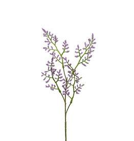 Mr Plant Mr Plant - Limonium