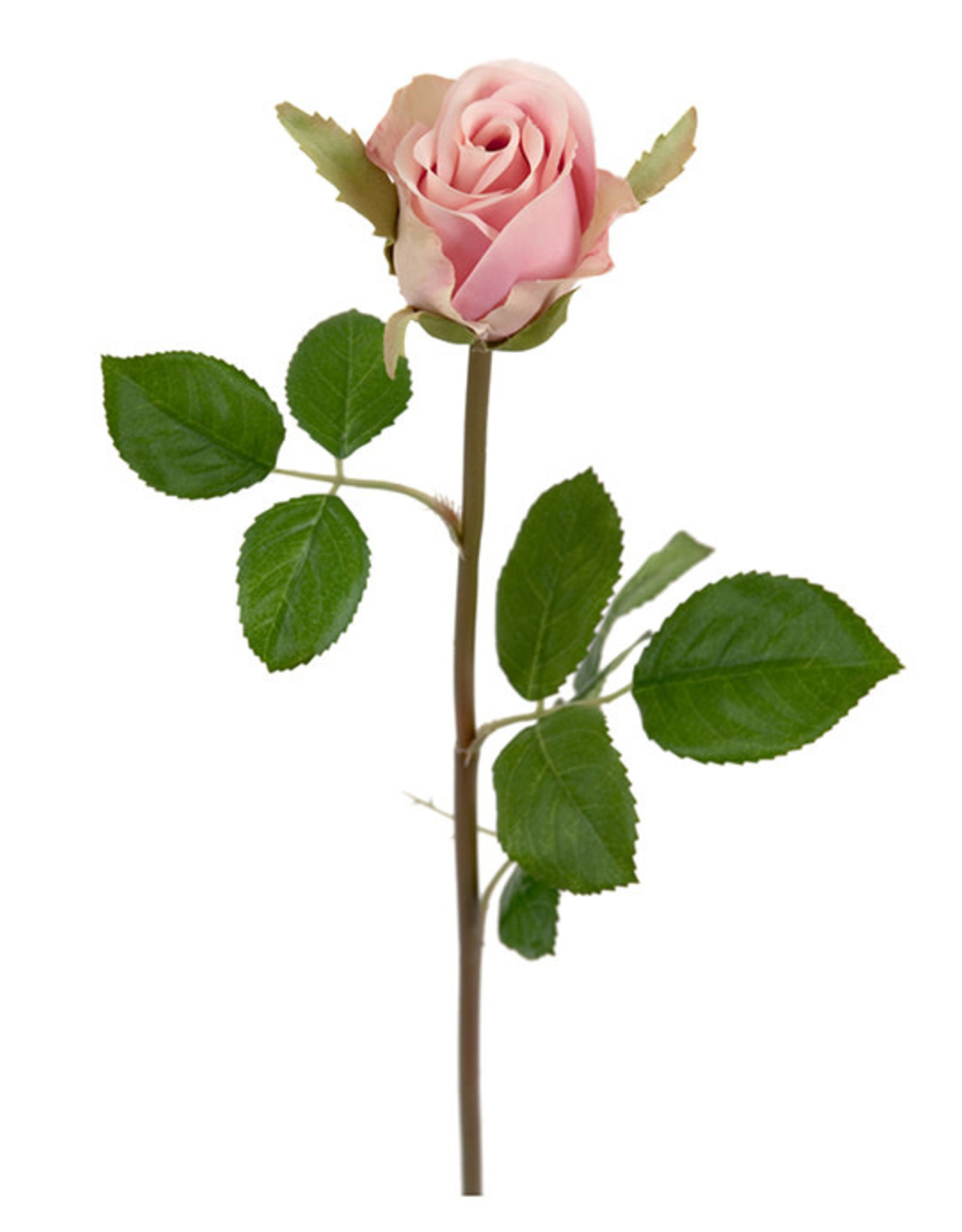 Mr Plant Mr Plant - Roze roos