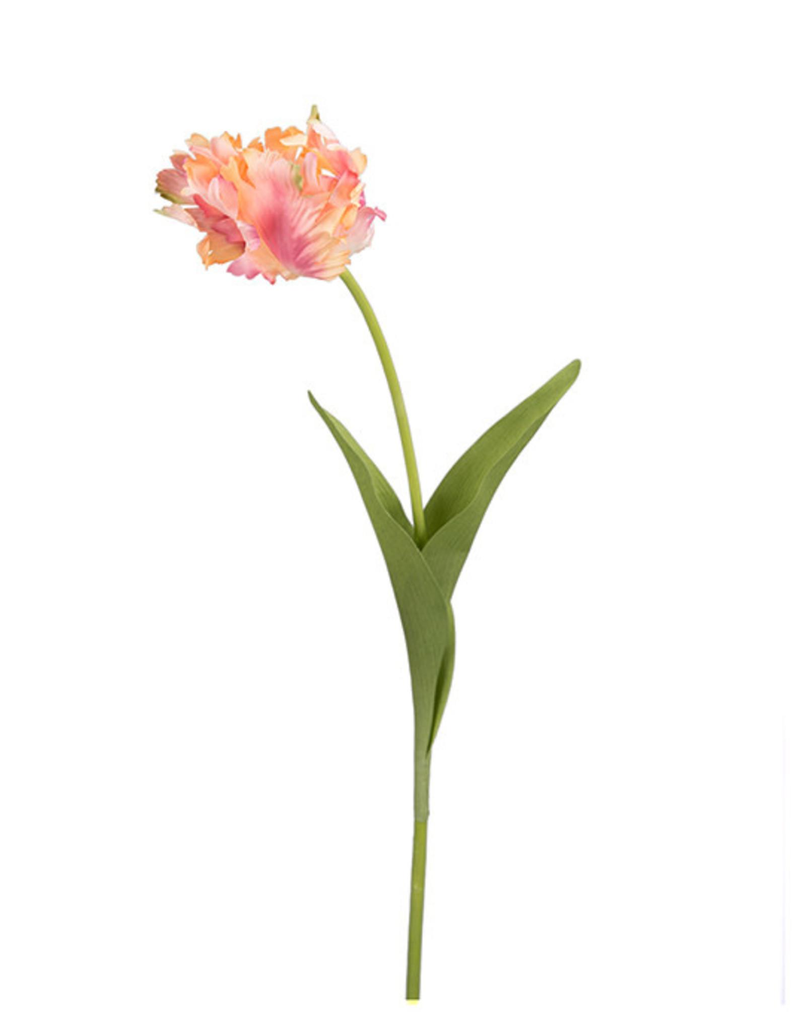 Mr Plant Mr Plant - Tulp