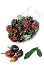 Mr Plant Mr Plant - Olives
