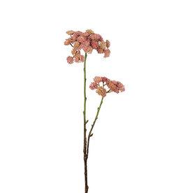 Mr Plant Mr Plant - Sedum