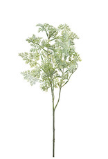 Mr Plant Mr Plant - Malört