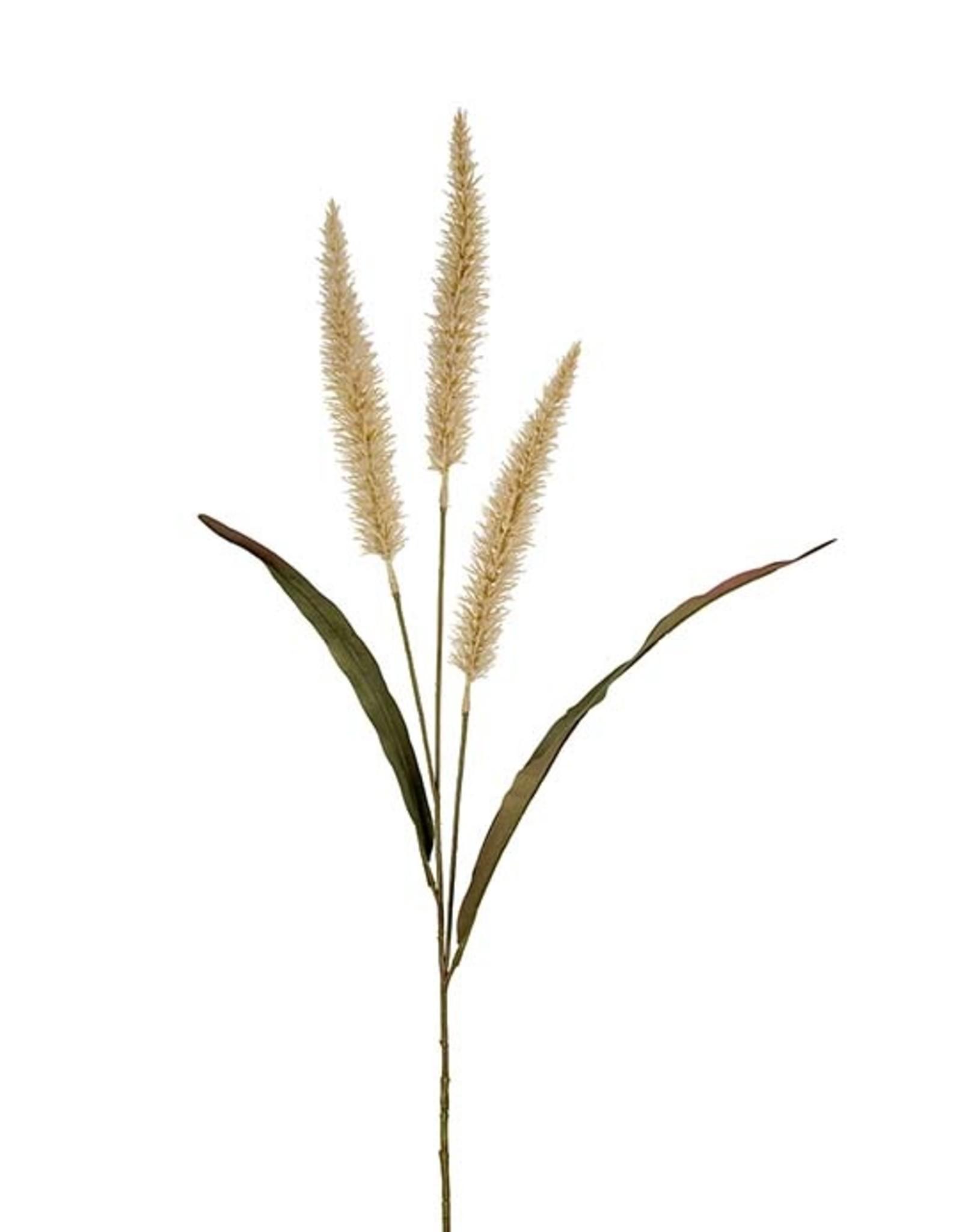 Mr Plant Mr Plant - Fjaderborstgras