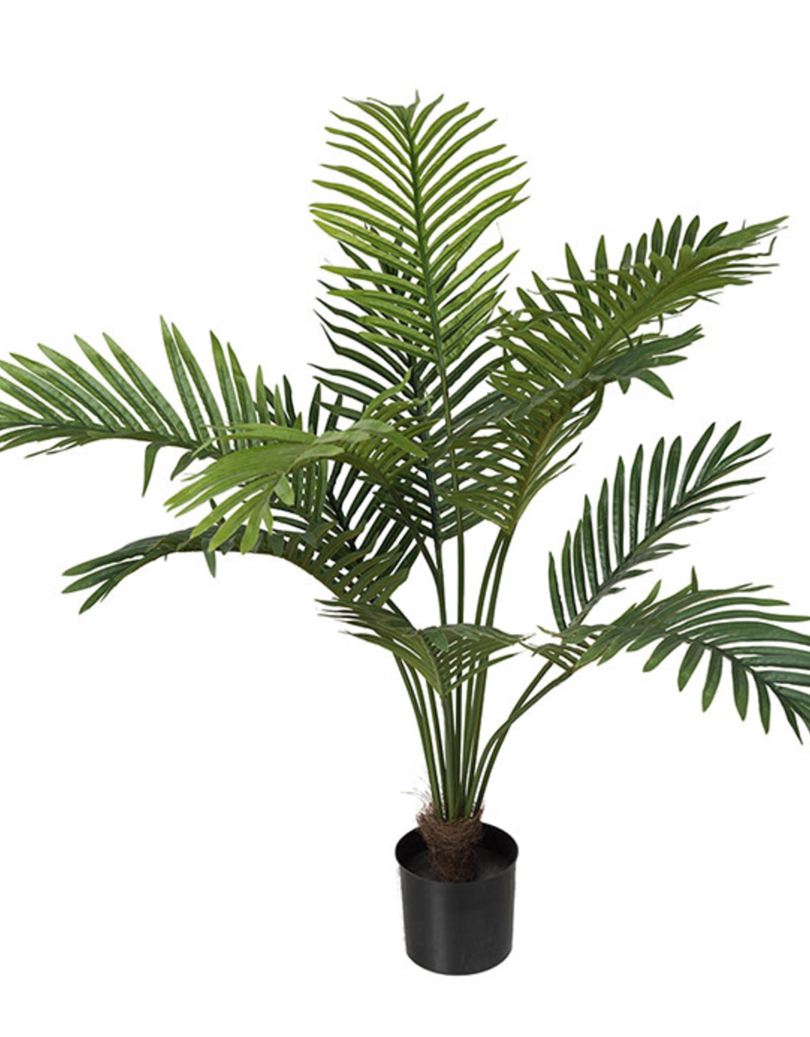 Mr Plant Mr Plant - Palm
