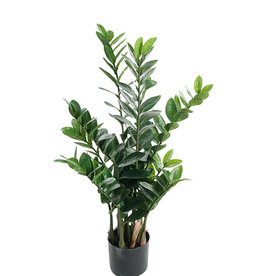 Mr Plant Mr Plant - Zamifolia
