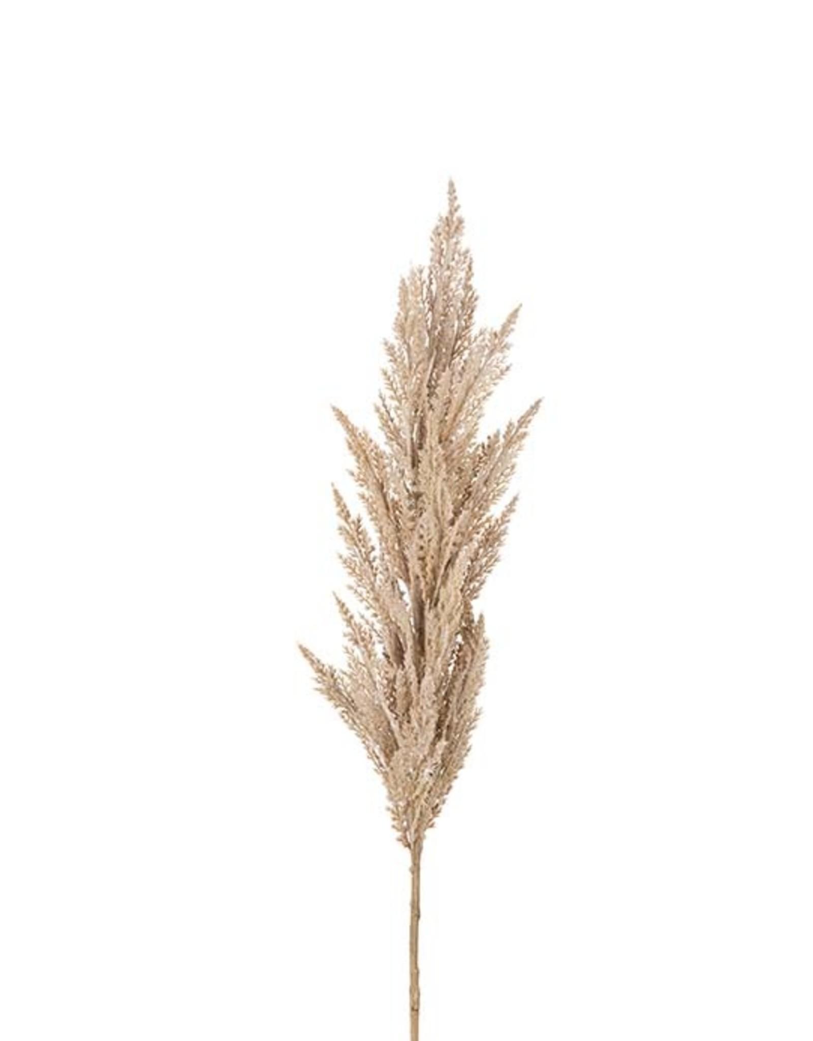 Mr Plant Mr Plant - Pampasgras