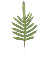 Mr Plant Mr plant - Ormbunksblad