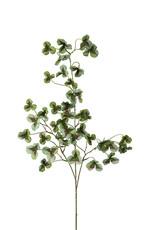 Mr Plant Mr plant- Oxalis