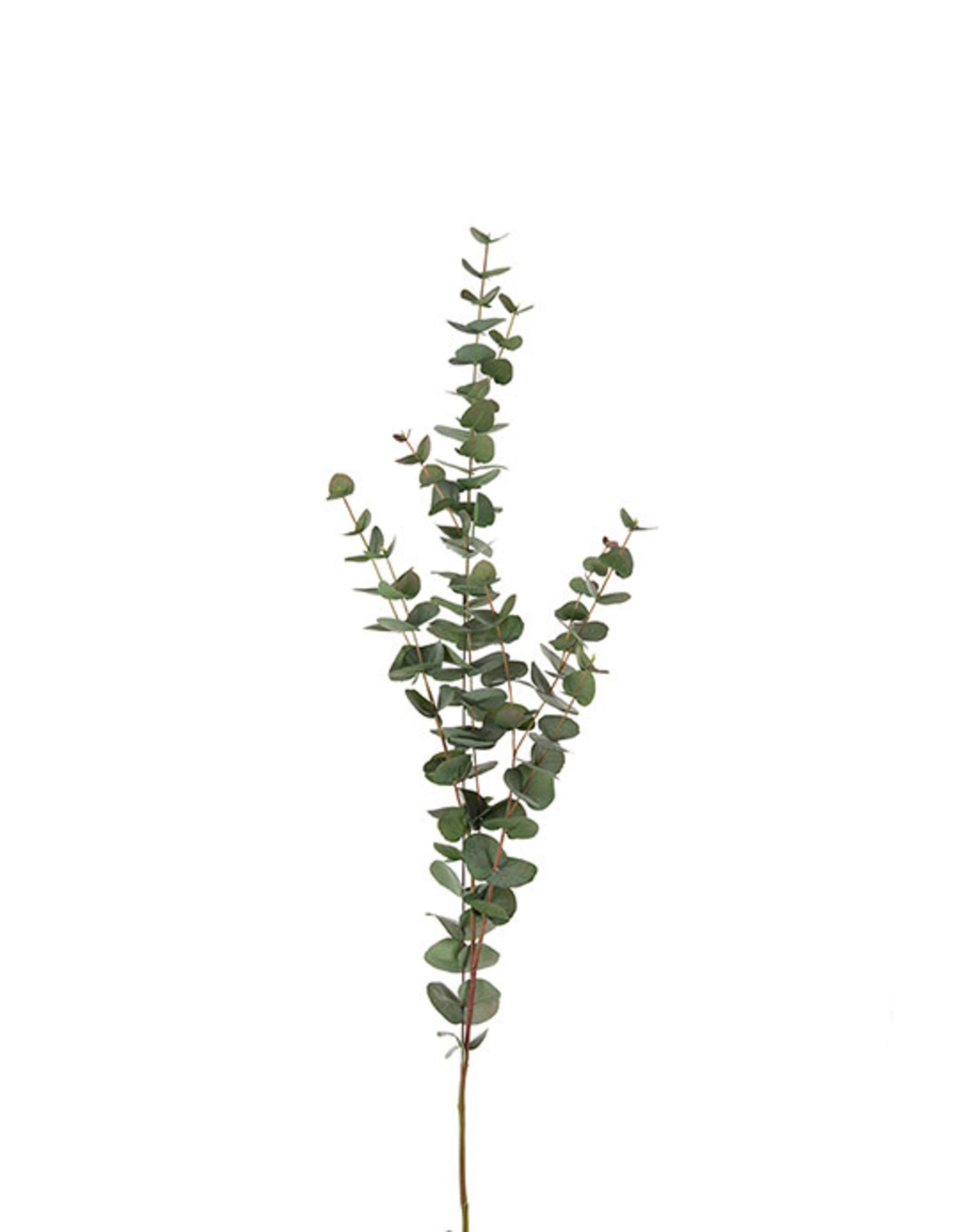 Mr Plant Mr Plant - Eucalyptus L
