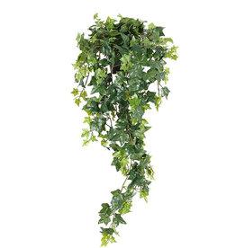 Mr Plant Mr Plant - Murgröna