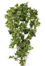 Mr Plant Mr Plant - Murgröna large 85 cm