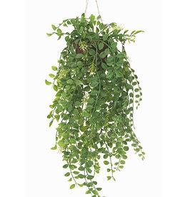 Mr Plant Mr Plant - Pilea hangplant