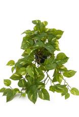 Mr Plant Mr Plant - Gullranka